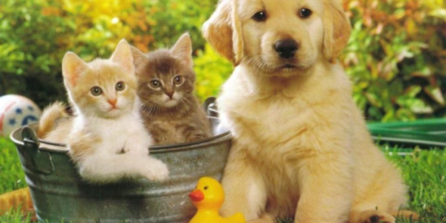 Vet Pet Insurance - Do You Have it For Your Furry Friend?
